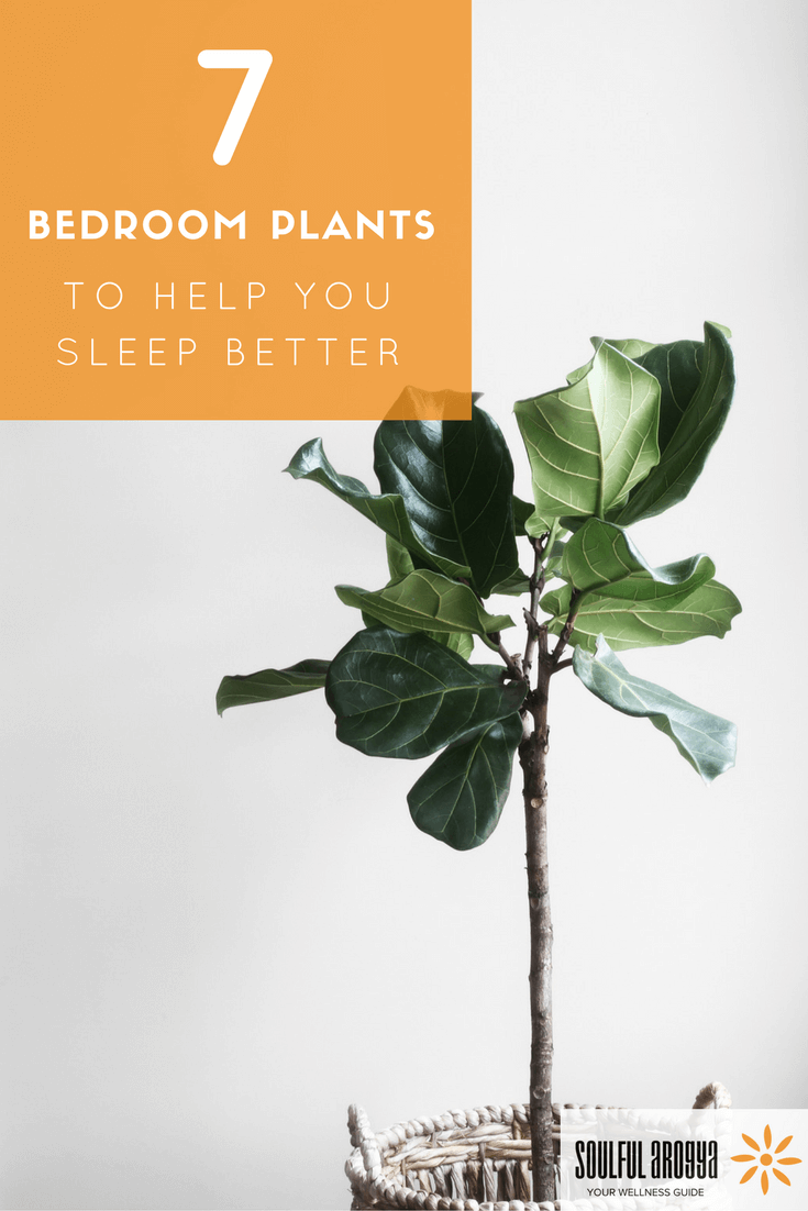 Best plant for bedroom for Best air purifying plants for bedroom
