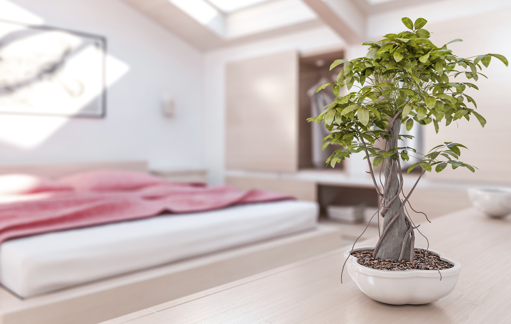 7 bedroom plants to help you sleep better for Plantas en el dormitorio feng shui